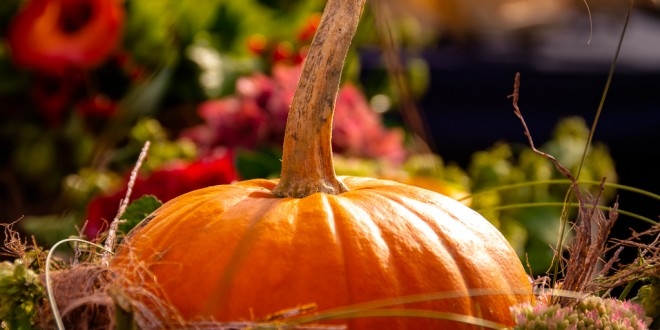 Pumpkins - a traditional autumn decoration. It adds bright colors and shapes to our gardens while the other colors of summer fade away.