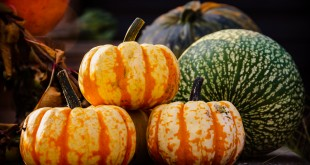Pumpkins - colorful and in many shapes and forms. Also called Winter squash, an annual fruit representing several species of the Cucurbita.